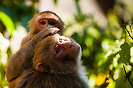 Monkeys groom themselves at the  Swoyambhunath Temple (Monkey Temple) in Kathmandu, Nepal.