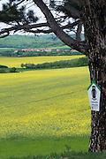 blühendes Rapsfeld, Landschaft bei Timmenrode, Harz, Sachsen-Anhalt, Deutschland | landscape near Timmenrode, Harz, Saxony-Anhalt, Germany