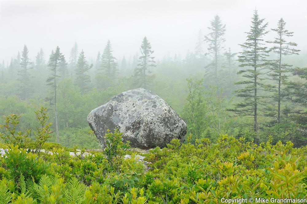 Fog along the walking trail through the forest to the seashore<br /> Seaside Adjunct of Kejimkujik National PArk<br /> Nova Scotia<br /> Canada