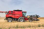 Case 7240 combine harvester harvesting golden barley