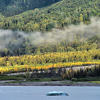Vegetation along Disenchantment Bay in Alaska<br />