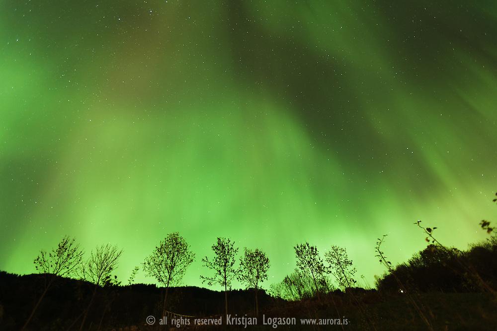 Aurora borealis over the town of Leikanger in Sogn og fjordane in Norway