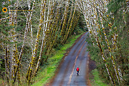 Road bicycling on the Hoh Road in Olympic National Forest, Washington, USA MR