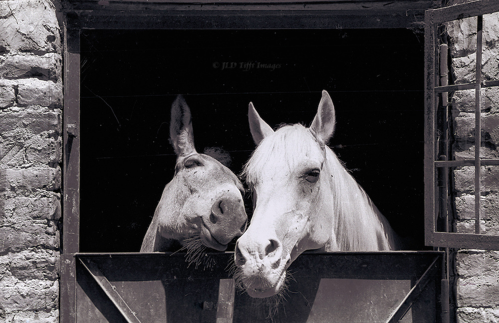 Heads of a mule and a horse touching noses as they peer out of their stable door.