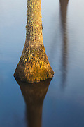 A stump rises from and is reflected on the calm water of Lee Hall Reservoir in Newport News Park, Newport News, Virginia.