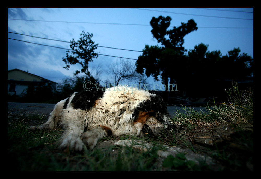 1 June, 2006. Lower 9th Ward, New Orleans, Louisiana. The sun sets on the first day of hurricane season. Katrina keeps on killing. A dead dog lies amongst piles of wreckage in the devastated Lower 9th Ward. Nine months after hurricane Katrina and the area continues to resemble a war zone.