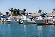 Dana Point Harbor Sport Fishing Boats Docked