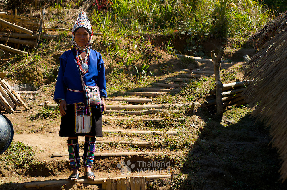Akha hill tribe woman in Chiang Rai province, Thailand. The Akha are the poorest of the hill tribes, well known to tourists for their extraordinary costumes and exotic appearance, the Akha originate from Tibet, and have only recently entered Thailand, the first immigrants arriving last century. They are less open to change than many other hilltribes, proudly retaining their old customs.