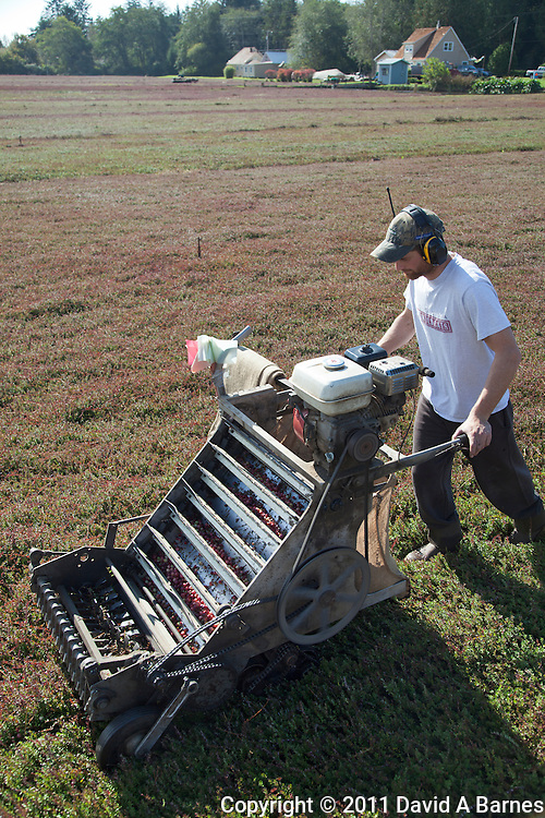 Man operating a cranberry harvesting machine.