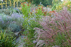 Autumn border at Marchants including Miscanthus sinensis 'Ferne Osten', Salvia uliginosa, and Helenium Helenium 'Dunkelpracht' seedling