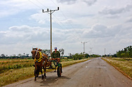 Horse and cart on a country road near Yaguaramas, Cienfuegos Province, Cuba.