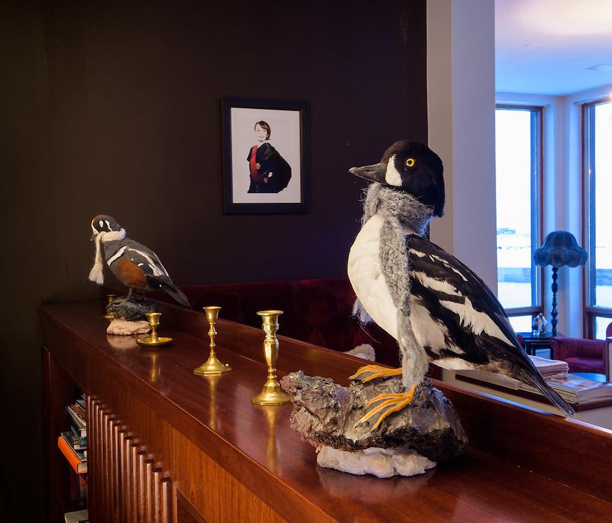 Stuffed Barrow's goldeneye and harlequin ducks, Hotel Búðir, Iceland