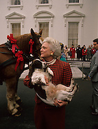 First Lady Barbara Bush holds presidential dog  Millie at the presentation of the White House Christmas Tree...Photograph by Dennis Brack, BB 29
