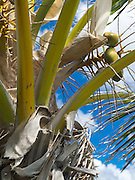 View of Coconut Palm, St. Johns, US Virgin Islands