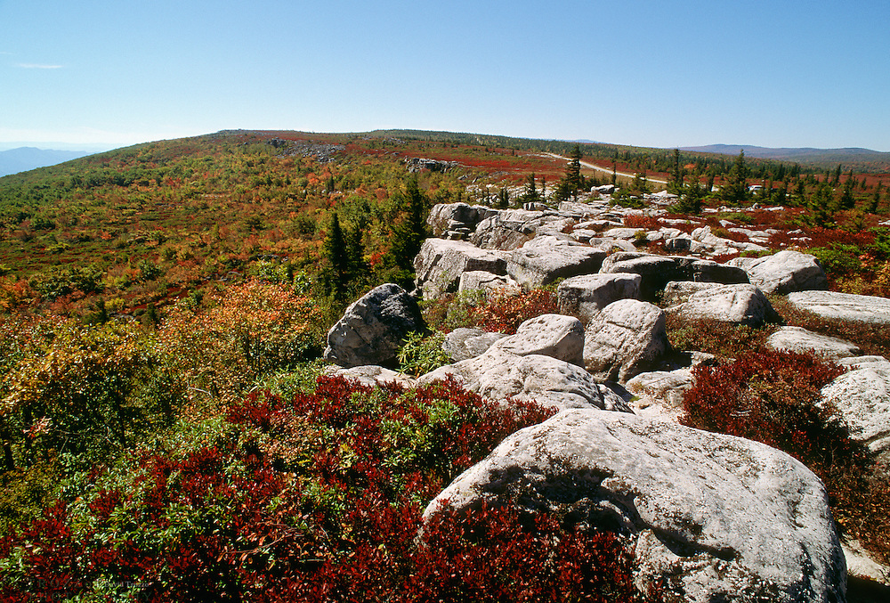 Bear Rocks at the Dolly Sods Wilderness, West Virginia. Dolly Sods is on a ridge crest that forms part of the Eastern Continental Divide. Is the highest plateau of its type east of the Mississippi River with altitude ranging from around 4,000 feet to about 2,700 feet.