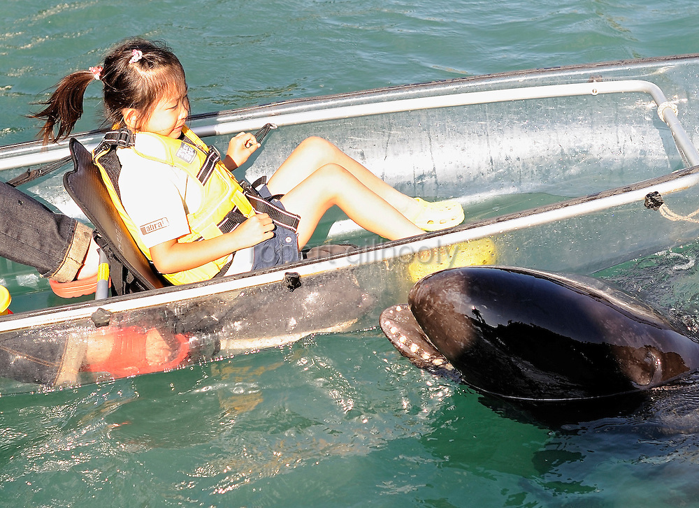 A frightened-looking young girl and her father feed a False Killer Whale -- a member of the oceanic dolphin family -- at the aquarium inside the whaling museum at Taiji, Japan on 10 September 2009..Photographer: Robert Gilhooly