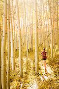 A runner weaves through a golden Aspen grove.<br /> La Sal Mountains, Colorado