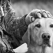 Gun dog trainer, Glen Cropper, pets his yellow Labrador retriever during a waterfowl hunt at Spring Slough Duck Club in east Idaho.