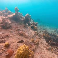 France, Guadeloupe, Iles des Saintes. Reef seascape of Gaudeloupe.