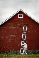JEROME A. POLLOS/Press..Jerry Evenson, with Running Wolf Construction, positions a ladder on the side of a barn Wednesday that was built on the Meyer homestead more than 100 years ago in Rathdrum. Evenson was doing some touch-up and maintenance work on the barn before having to pack up due to a looming thunderstorm.