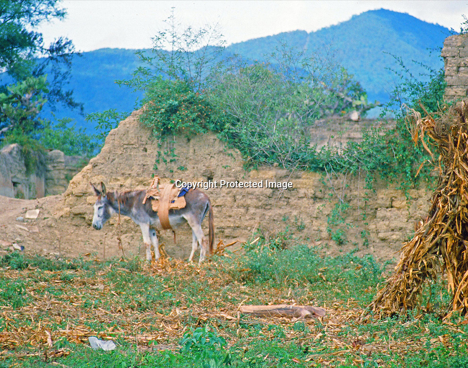 "A saddled and packed burro waits patiently by an adobe wall next to a dirt path in the mountains of Central Mexico. NOTE: Click ""Shopping Cart"" icon for available sizes and prices. If a ""Purchase this image"" screen opens, click arrow on it. Doing so does not constitute making a purchase. To purchase, additional steps are required."