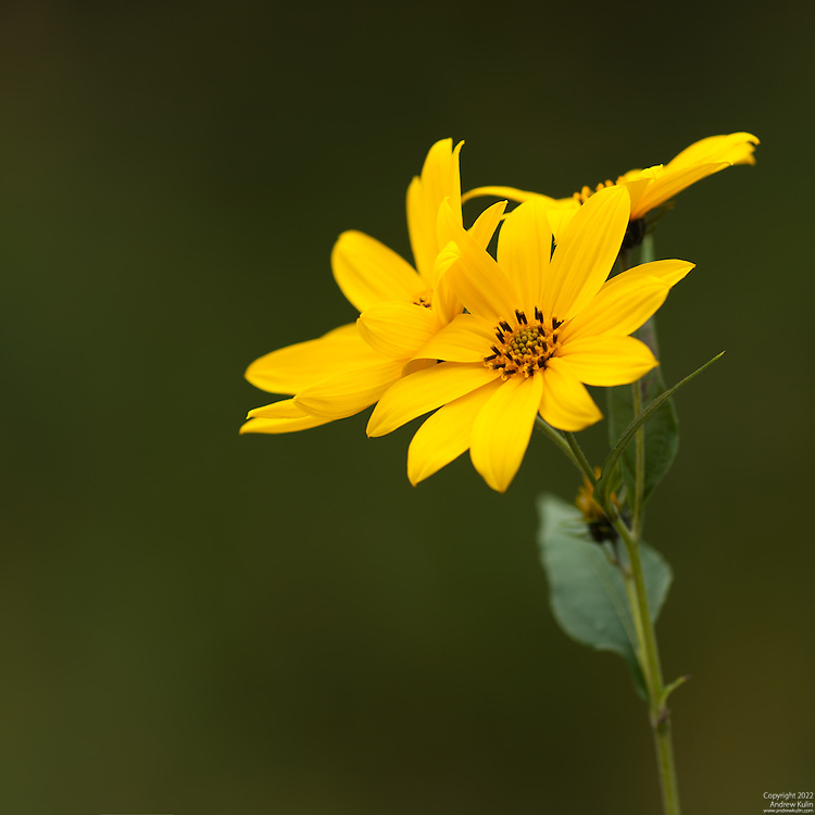 8-shot stitched image using PTGUI Pro, Canon 40D with 300 mm f/4L + 1.4 TC