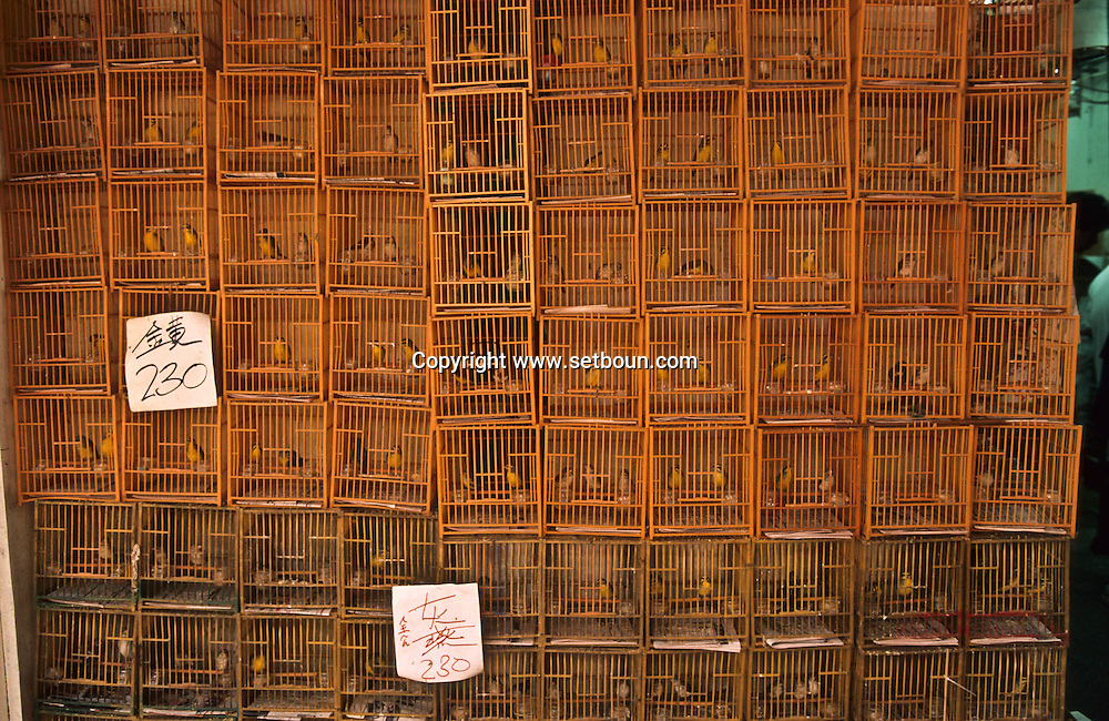Bird's street and market in Mongkok. Hong Kong   /// cages du Marche aux oiseaux à Mongkok. Kowloon. Hong kong