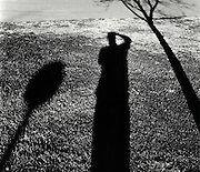 Self portrait of shadow with tree and stop sign.