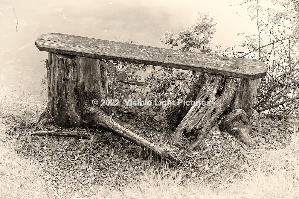 Wooden bench across two tree stumps next to a pond.