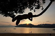 Lazing in a tree at sunset St Stephen's Beach Stanley Hong Kong Island.© Jayne Russell.21.01.12.21st January 2012