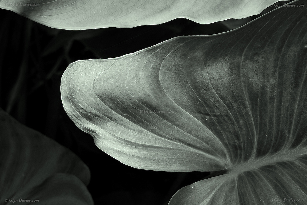 Abstract of large leaf