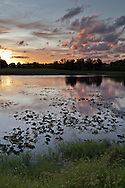 A tranquil pond partly covered with lily pads with dramatic sky and setting sun in the background. WATERMARKS WILL NOT APPEAR ON PRINTS OR LICENSED IMAGES.
