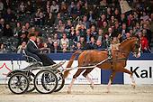 Presentatie Jaargang 2016 Gelders paard