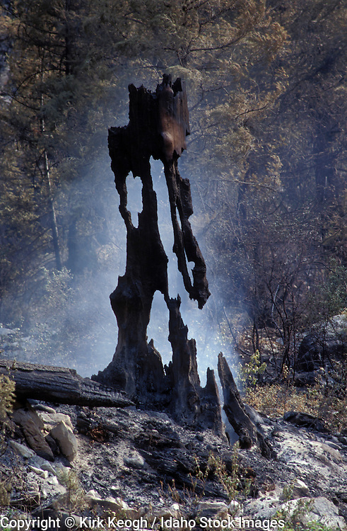 Idaho, Hot Creek Fire, Boise National Forest, Lowman District, July, 2003..smoking burned out snag/stump. graphic image..VERTICAL