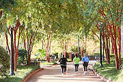 Walkers along the Swamp Rabbit Trail and bike path in Falls Park on the Reedy River in downtown Greenville, South Carolina.