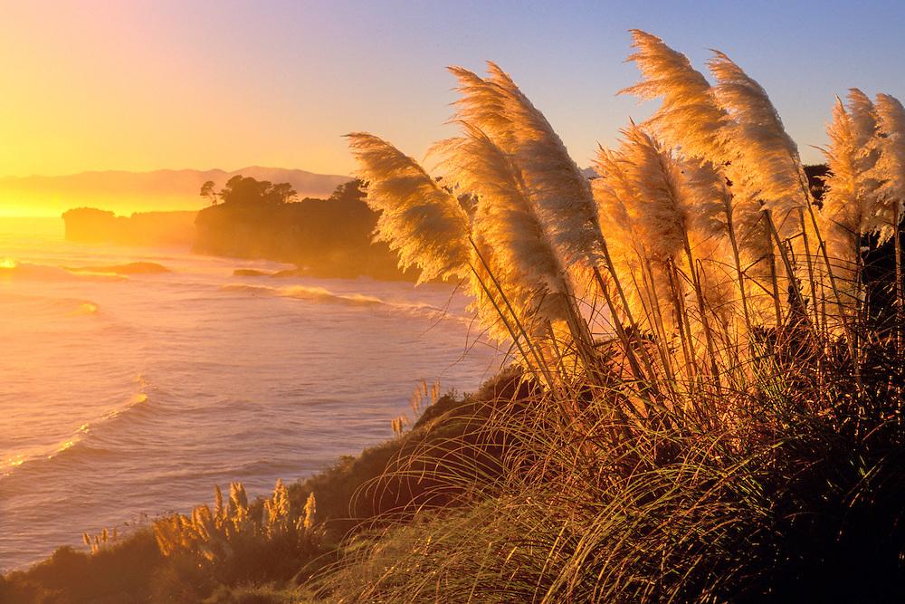 New Zealand, South Island, West Coast, Westport, Coast at Cape Foulwind