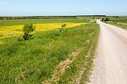 Unsurfaced road track crossing chalk grassland on Salisbury Plain, near Larkhill, Wiltshire, England, UK