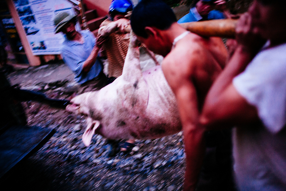 Men carry a pig to its cage in the northern mountain town of Sapa in Vietnam.