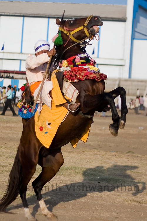 Nihang or sikh religious soldier performs a stunt on the second day of the Khalsa festival celebration in Nanded, 650 kms south of Mumbai on November 1, 2008. Sikhs all over the world are celebrating the 300th year of the consecration of the Sikh holy book, the Guru Granth Sahib.