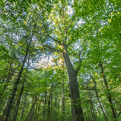 The forest at the Donibristle Reservation in Topsfield, Massachusetts.