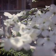 Yashica D .Kodak Porta 400 film.