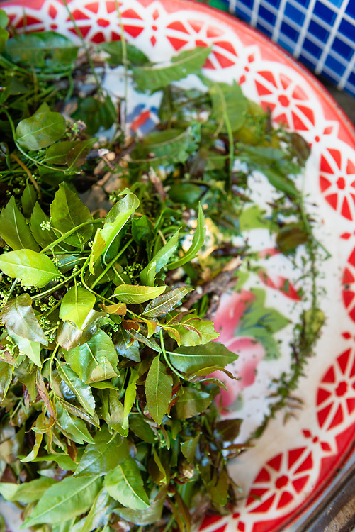 Fresh herbs at a local market in Chiang Mai