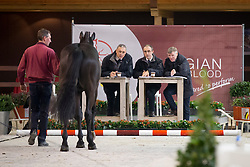 078, Citano van Prinsenveld<br /> BWP Hengsten keuring Koningshooikt 2015<br /> © Hippo Foto - Dirk Caremans<br /> 22/01/16