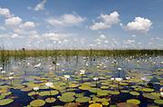 The Okavango Delta, Botswana, Southern Africa, Africa..© Zute & Demelza Lightfoot.www.lightfootphoto.com