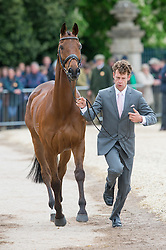 Burton Christopher, (AUS), TS Jamaimo<br /> First Horse Inspection - Mitsubishi Motors Badminton Horse Trials <br /> Badminton 2015