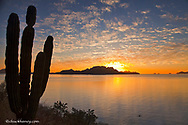 Sea kayaker on the Gulf of California at sunrise near Loreto Mexico