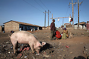"The Korogocho slum in Nairobi, Kenya, on Monday, Jan. 12, 2009. Korogocho is third largest slum in Nairobi and has a population of approximately 250,000 with an average of 5-6 persons per room. The ITC (International Trade Center) and MAX&Co. work with communities from these areas to promote ""ethical fashion"" which they hope will  ""make a tangible contribution to those who live in marginal conditions and hardship."""