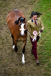 © Licensed to London News Pictures. 12/05/2017. Windsor, UK.  A horse being led back from competition on day three of the Royal Windsor Horse show. The five day equestrian event takes place in the grounds of Windsor Castle. Photo credit: Ben Cawthra/LNP