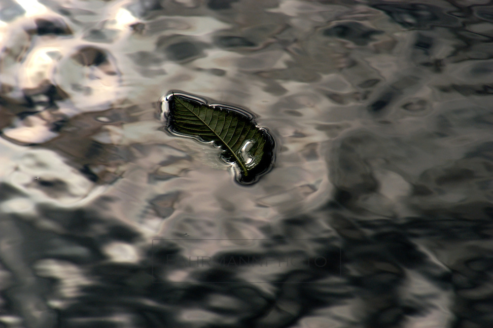 A green leaf floats on the reflective surface of Lake Nokomis.  The leaf is partially submerged showing the surface tension of the water.  The water takes on the look of mercury or quicksilver as it is commonly called.