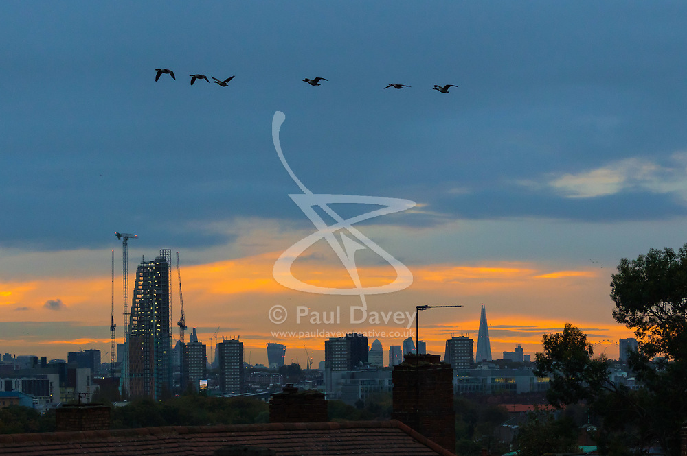 London, October 23 2017. Geese fly across the city's skyline as the sun rises on day one of London's new anti-pollution T-Charge. © Paul Davey